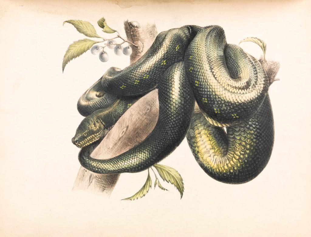 蛇(ヘビ)の絵