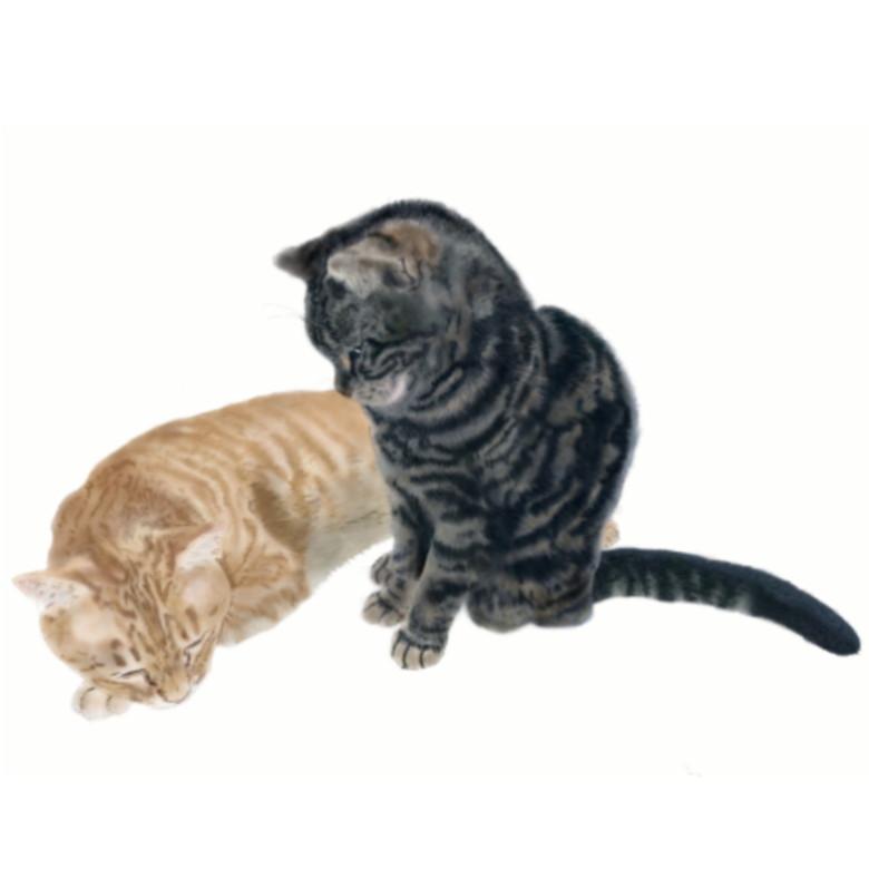画家「rune」の猫の絵